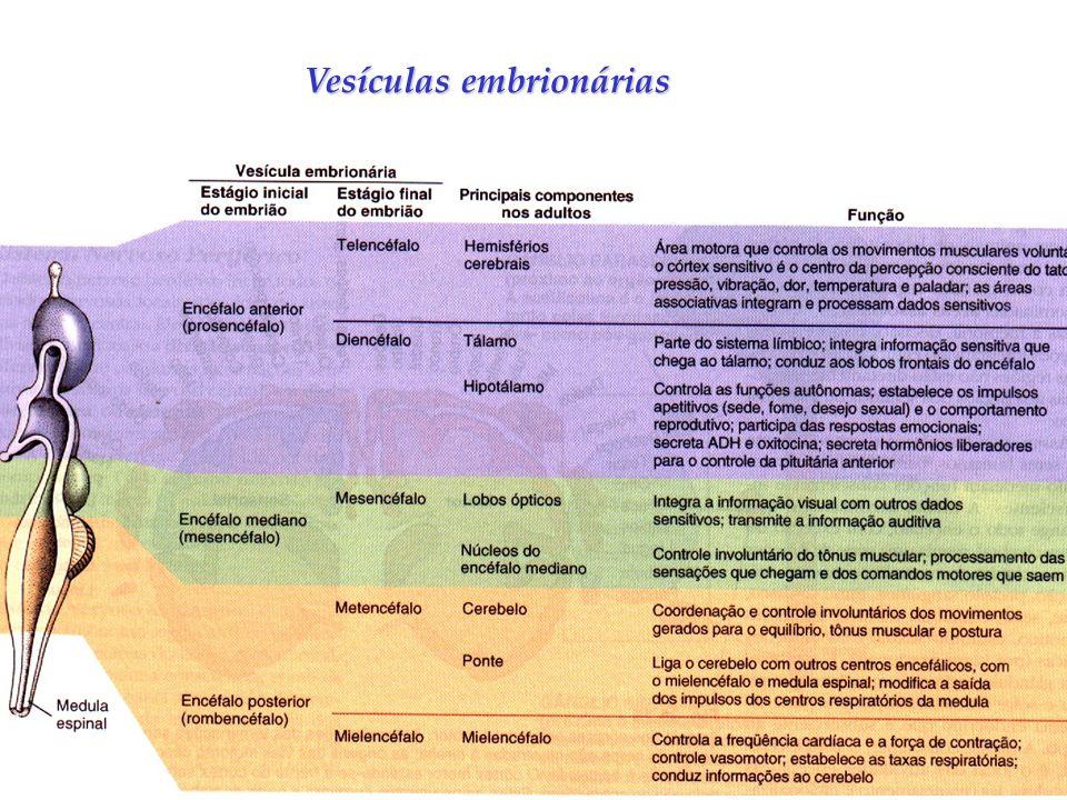 Vesículas embrionárias