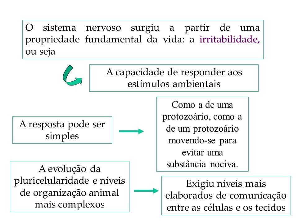 irritabilidade, O sistema nervoso surgiu a partir de uma propriedade fundamental da vida: a irritabilidade, ou seja A capacidade de responder aos estí
