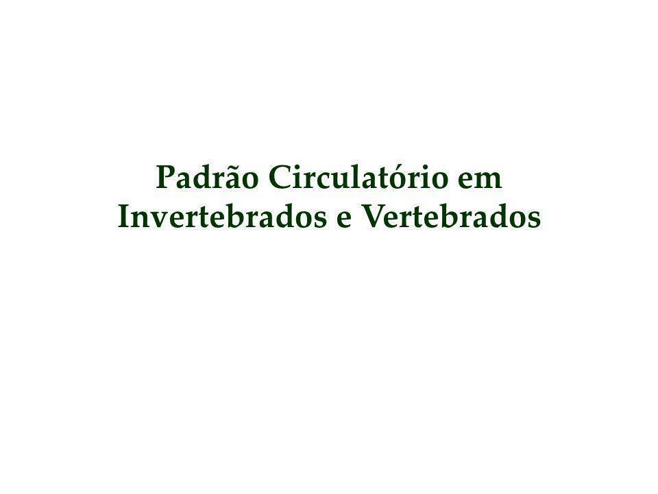 Padrão Circulatório em Invertebrados e Vertebrados