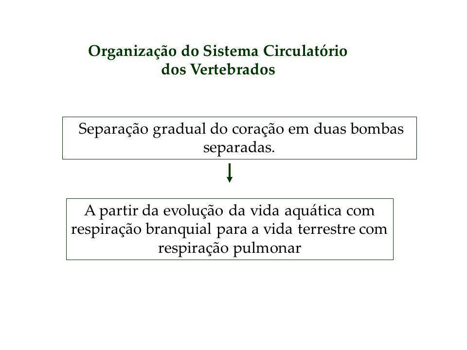 Organização do Sistema Circulatório dos Vertebrados Separação gradual do coração em duas bombas separadas. A partir da evolução da vida aquática com r