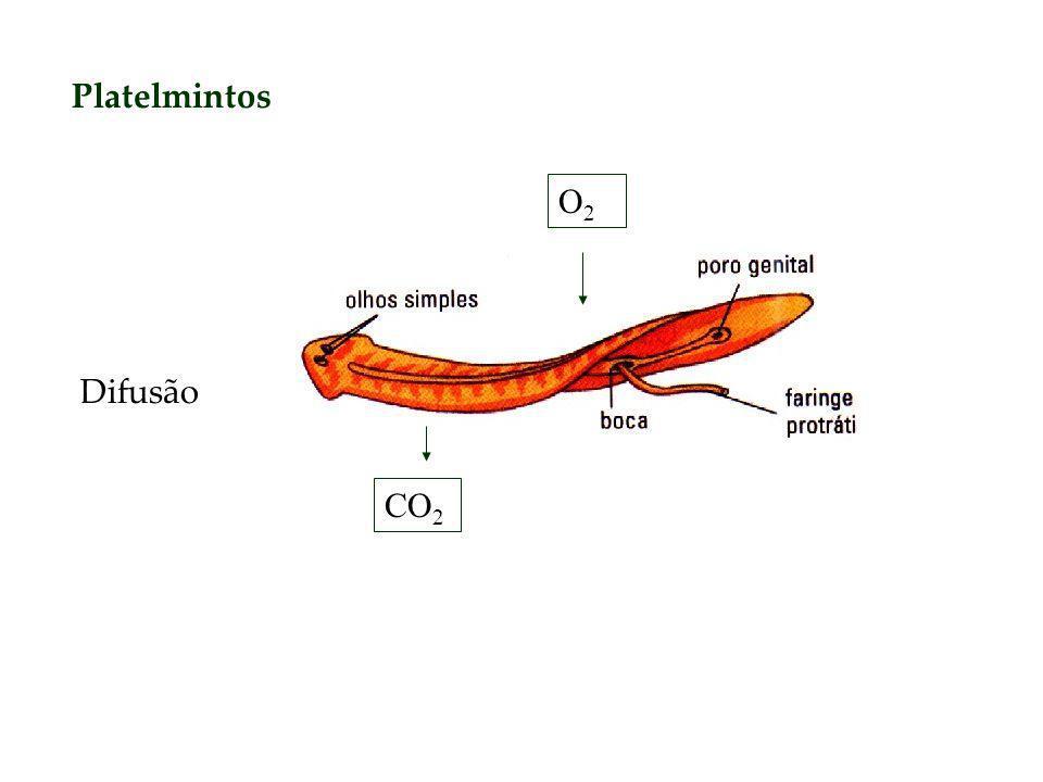 Platelmintos O2O2 CO 2 Difusão