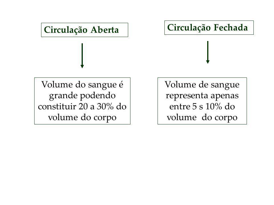 Circulação Aberta Volume do sangue é grande podendo constituir 20 a 30% do volume do corpo Circulação Fechada Volume de sangue representa apenas entre