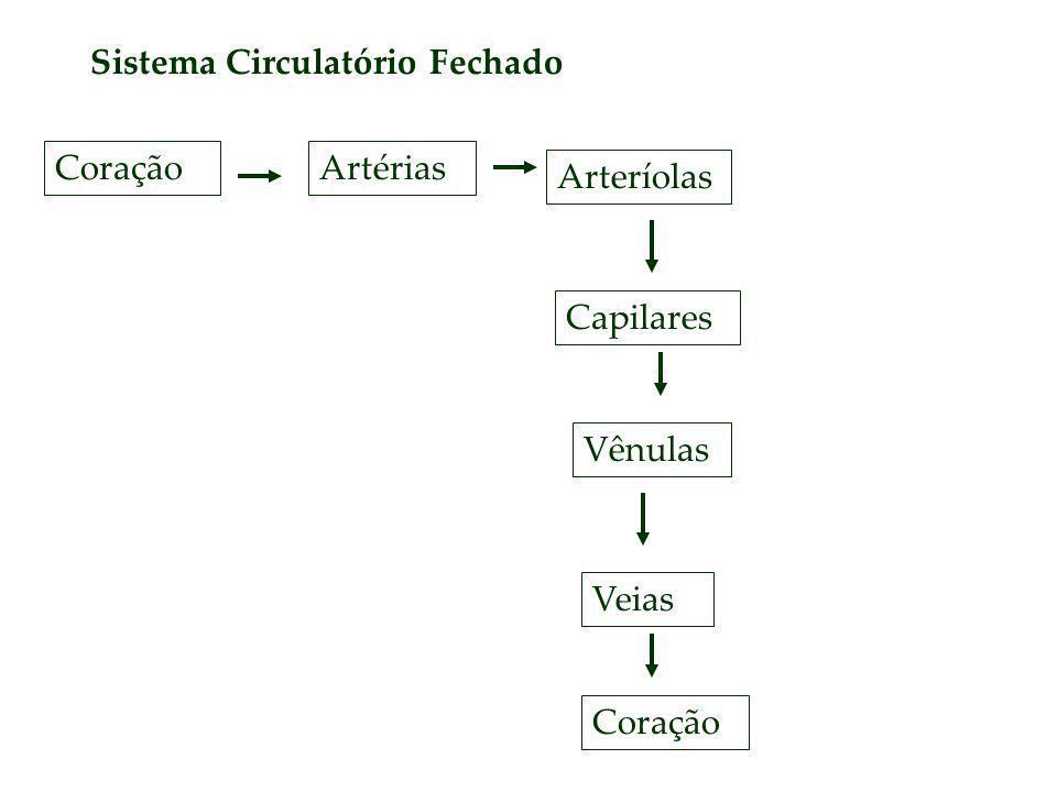 Sistema Circulatório Fechado CoraçãoArtérias Arteríolas Capilares Vênulas Veias Coração