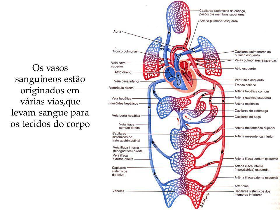 Organização do Sistema Circulatório dos Vertebrados Separação gradual do coração em duas bombas separadas.