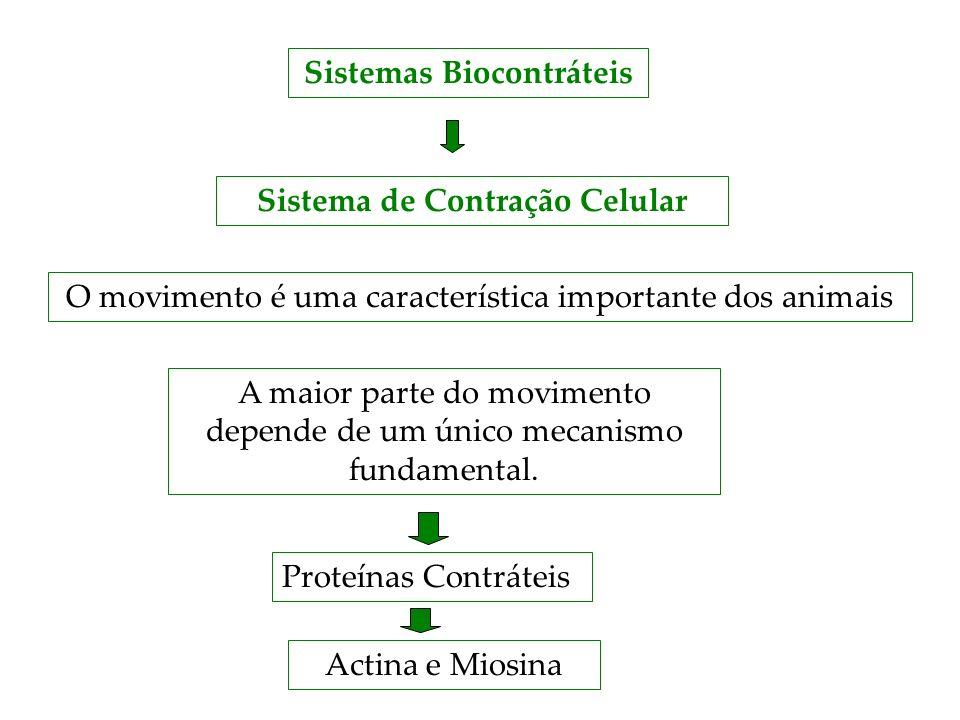 Sistemas Biocontráteis Sistema de Contração Celular O movimento é uma característica importante dos animais A maior parte do movimento depende de um ú