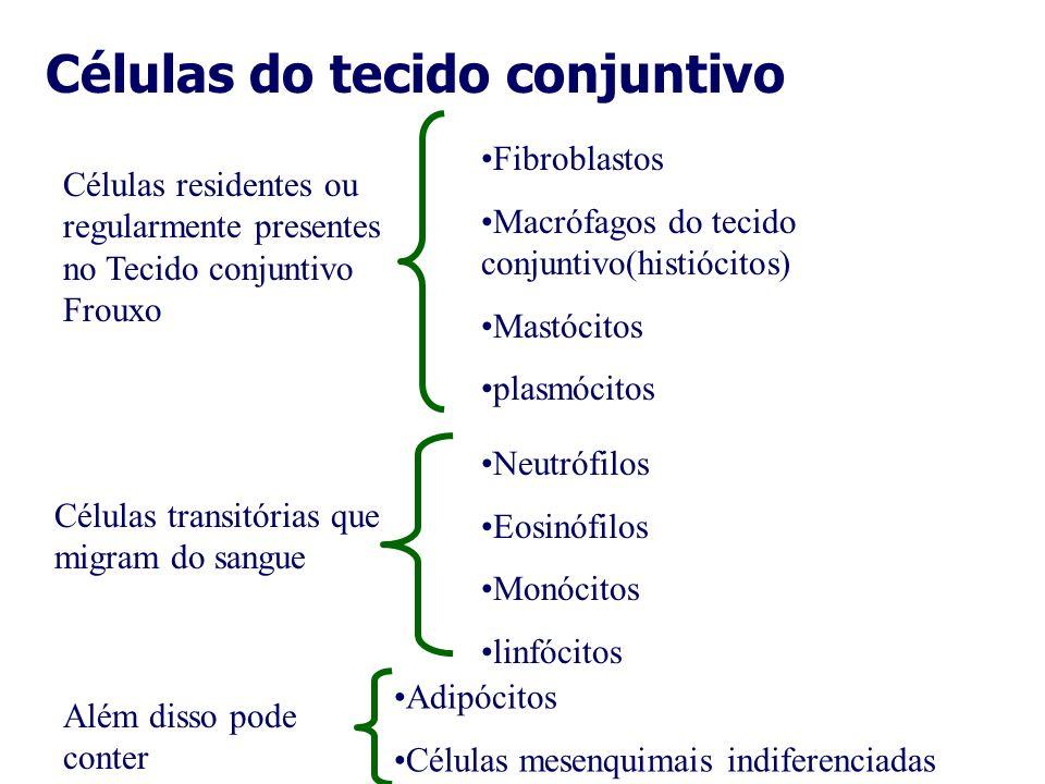 Células do tecido conjuntivo Células residentes ou regularmente presentes no Tecido conjuntivo Frouxo Fibroblastos Macrófagos do tecido conjuntivo(his
