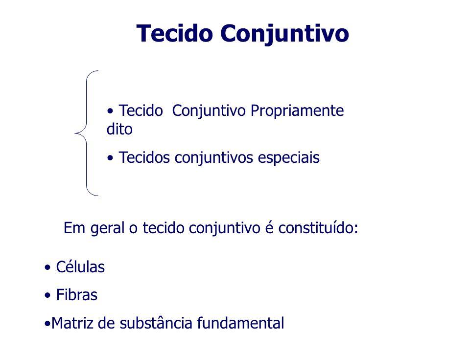 Tecido Conjuntivo Propriamente dito Tecidos conjuntivos especiais Tecido Conjuntivo Em geral o tecido conjuntivo é constituído: Células Fibras Matriz