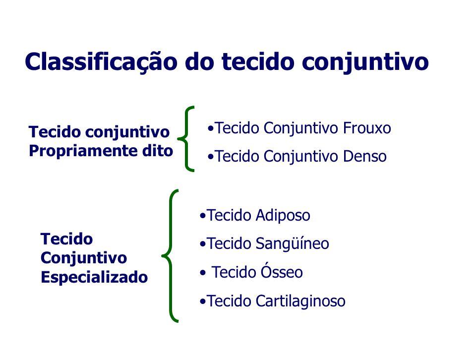 Classificação do tecido conjuntivo Tecido conjuntivo Propriamente dito Tecido Conjuntivo Frouxo Tecido Conjuntivo Denso Tecido Conjuntivo Especializad