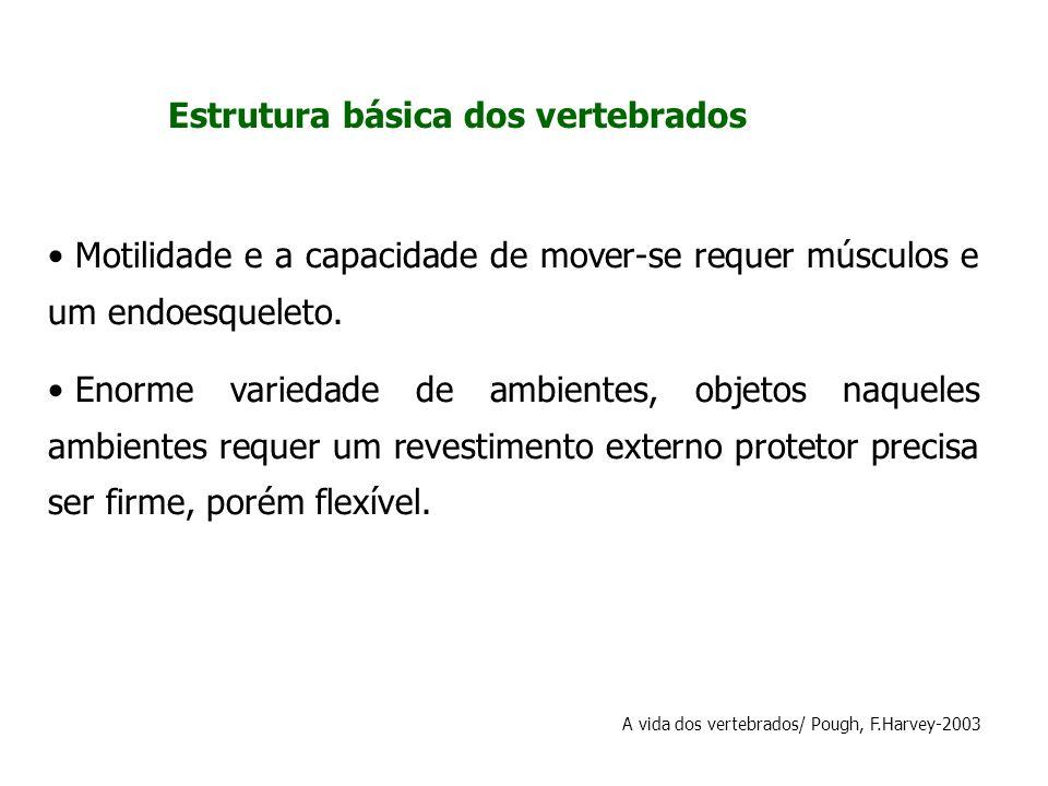 Estrutura básica dos vertebrados Motilidade e a capacidade de mover-se requer músculos e um endoesqueleto. Enorme variedade de ambientes, objetos naqu