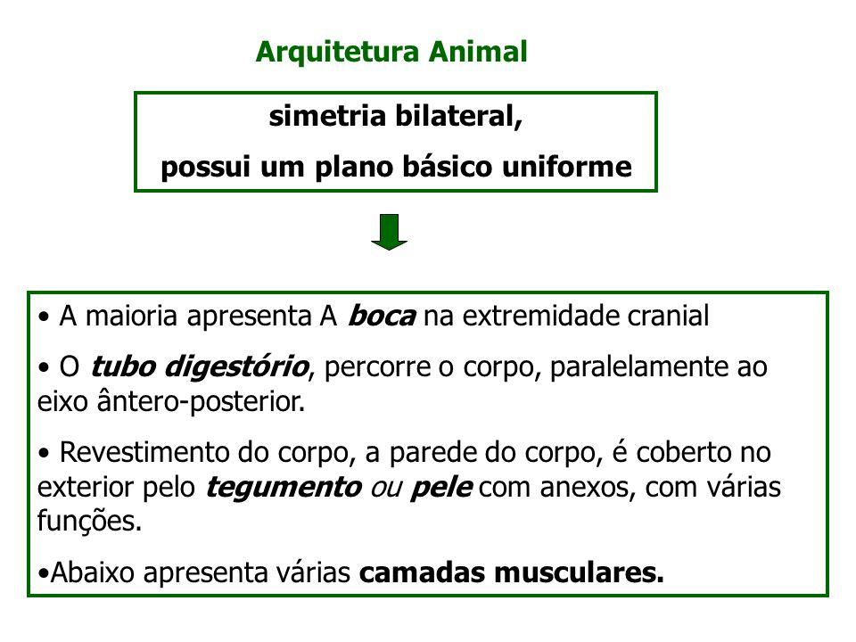 Arquitetura Animal A maioria apresenta A boca na extremidade cranial O tubo digestório, percorre o corpo, paralelamente ao eixo ântero-posterior. Reve