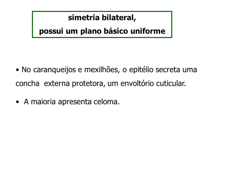 simetria bilateral, possui um plano básico uniforme No caranqueijos e mexilhões, o epitélio secreta uma concha externa protetora, um envoltório cuticu
