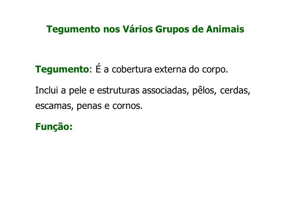 Tegumento nos Vários Grupos de Animais Tegumento: É a cobertura externa do corpo. Inclui a pele e estruturas associadas, pêlos, cerdas, escamas, penas