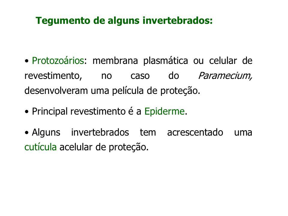 Tegumento de alguns invertebrados: Protozoários: membrana plasmática ou celular de revestimento, no caso do Paramecium, desenvolveram uma película de