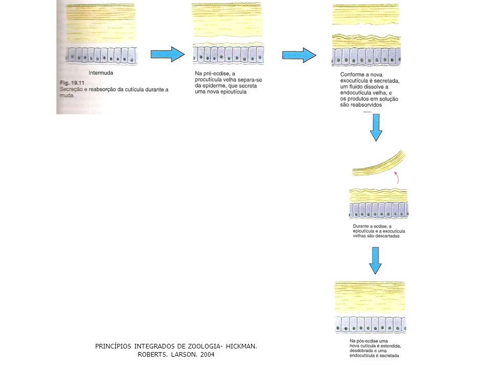 PRINCÍPIOS INTEGRADOS DE ZOOLOGIA- HICKMAN. ROBERTS. LARSON. 2004