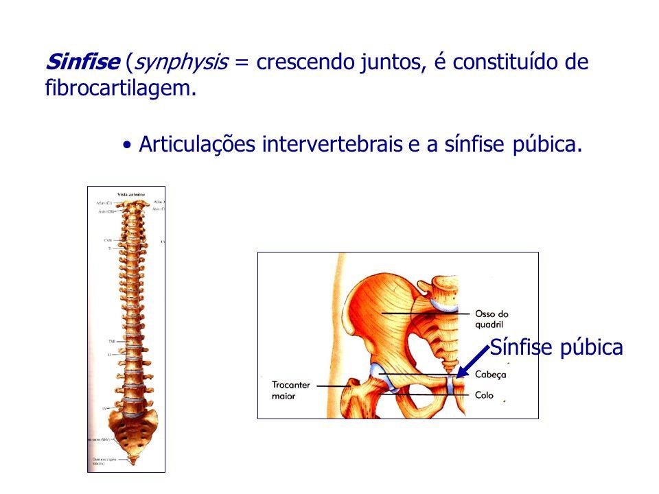 Sinfise (synphysis = crescendo juntos, é constituído de fibrocartilagem. Articulações intervertebrais e a sínfise púbica. Sínfise púbica