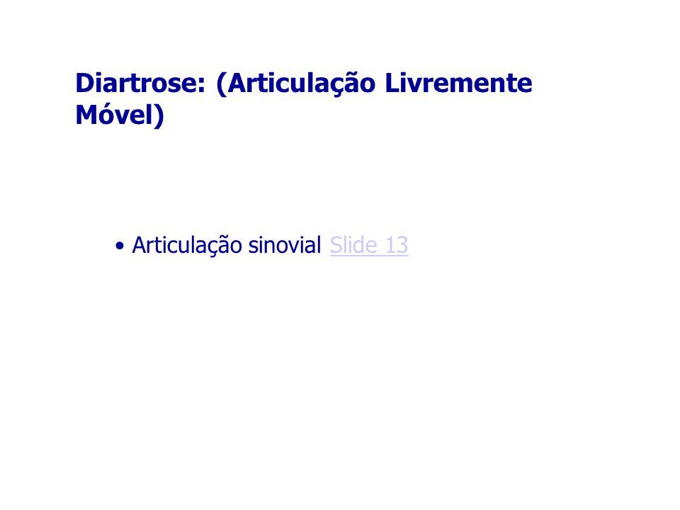 Diartrose: (Articulação Livremente Móvel) Articulação sinovial Slide 13Slide 13