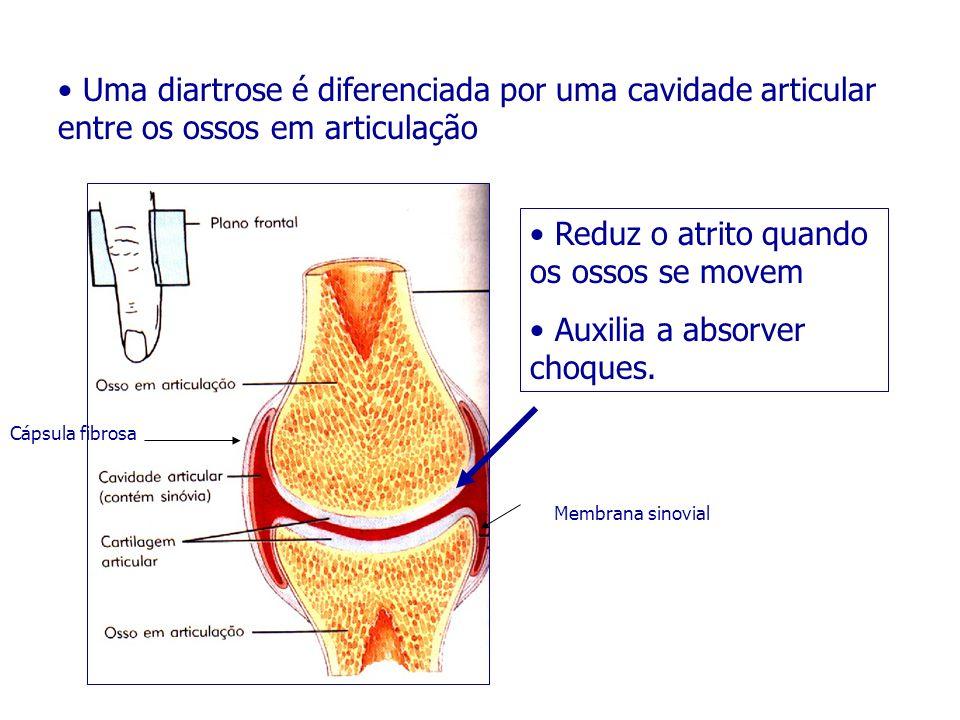 Uma diartrose é diferenciada por uma cavidade articular entre os ossos em articulação Reduz o atrito quando os ossos se movem Auxilia a absorver choqu