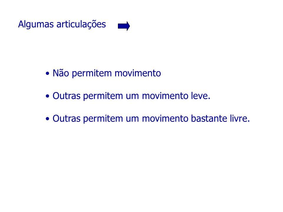 Algumas articulações Não permitem movimento Outras permitem um movimento leve. Outras permitem um movimento bastante livre.