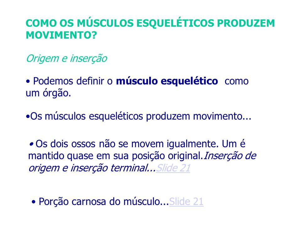COMO OS MÚSCULOS ESQUELÉTICOS PRODUZEM MOVIMENTO? Origem e inserção Podemos definir o músculo esquelético como um órgão. Os músculos esqueléticos prod