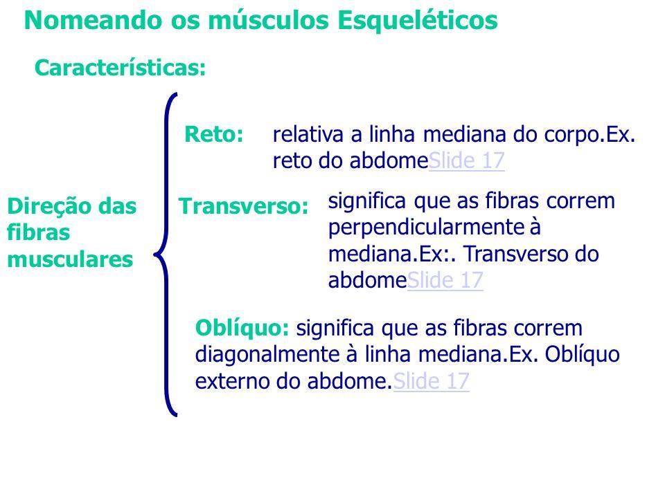 Nomeando os músculos Esqueléticos Características: Direção das fibras musculares relativa a linha mediana do corpo.Ex. reto do abdomeSlide 17Slide 17