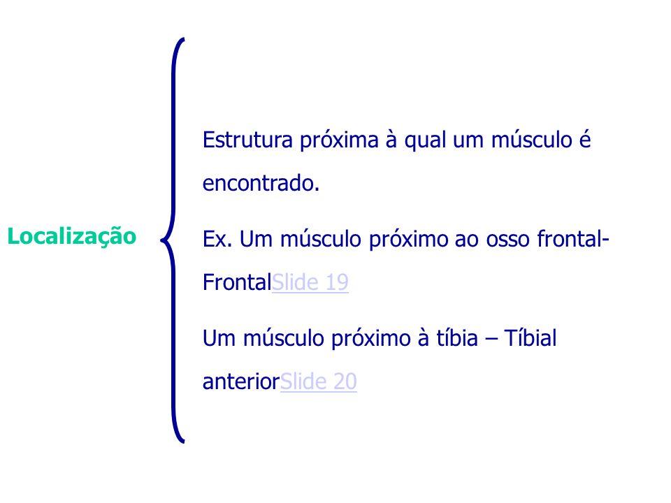 Localização Estrutura próxima à qual um músculo é encontrado. Ex. Um músculo próximo ao osso frontal- FrontalSlide 19Slide 19 Um músculo próximo à tíb