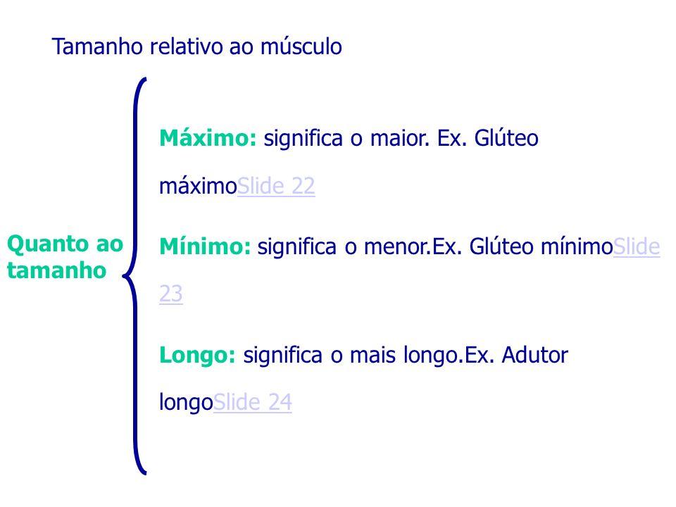 Quanto ao tamanho Tamanho relativo ao músculo Máximo: significa o maior. Ex. Glúteo máximoSlide 22Slide 22 Mínimo: significa o menor.Ex. Glúteo mínimo