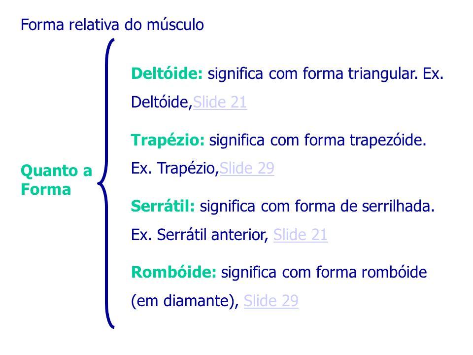 Quanto a Forma Deltóide: significa com forma triangular. Ex. Deltóide,Slide 21Slide 21 Trapézio: significa com forma trapezóide. Ex. Trapézio,Slide 29