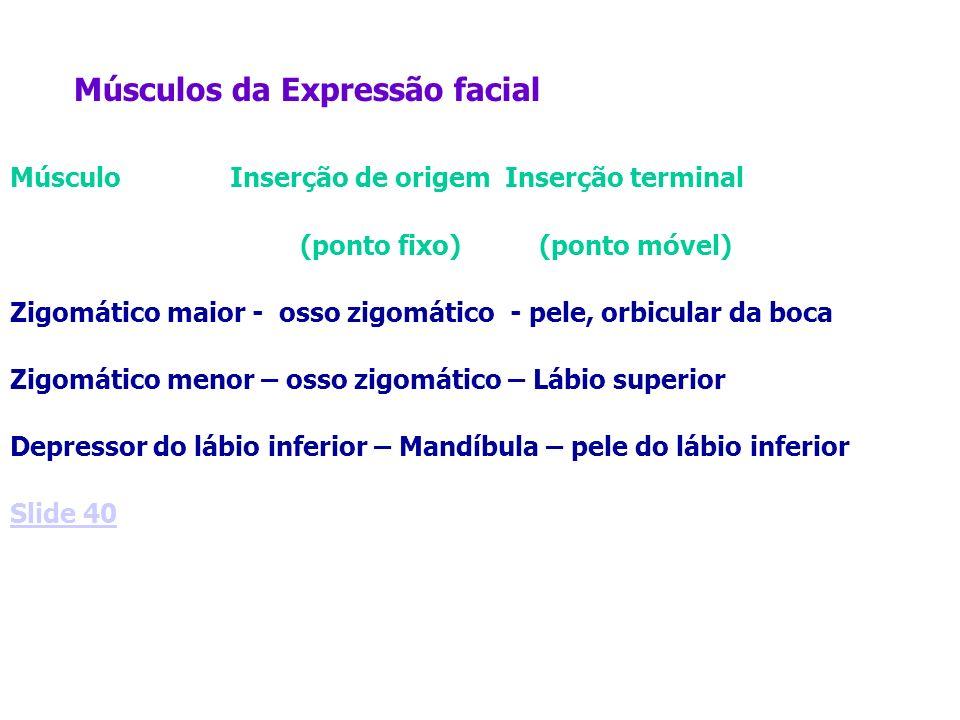 Músculos da Expressão facial Músculo Inserção de origem Inserção terminal (ponto fixo) (ponto móvel) Zigomático maior - osso zigomático - pele, orbicu