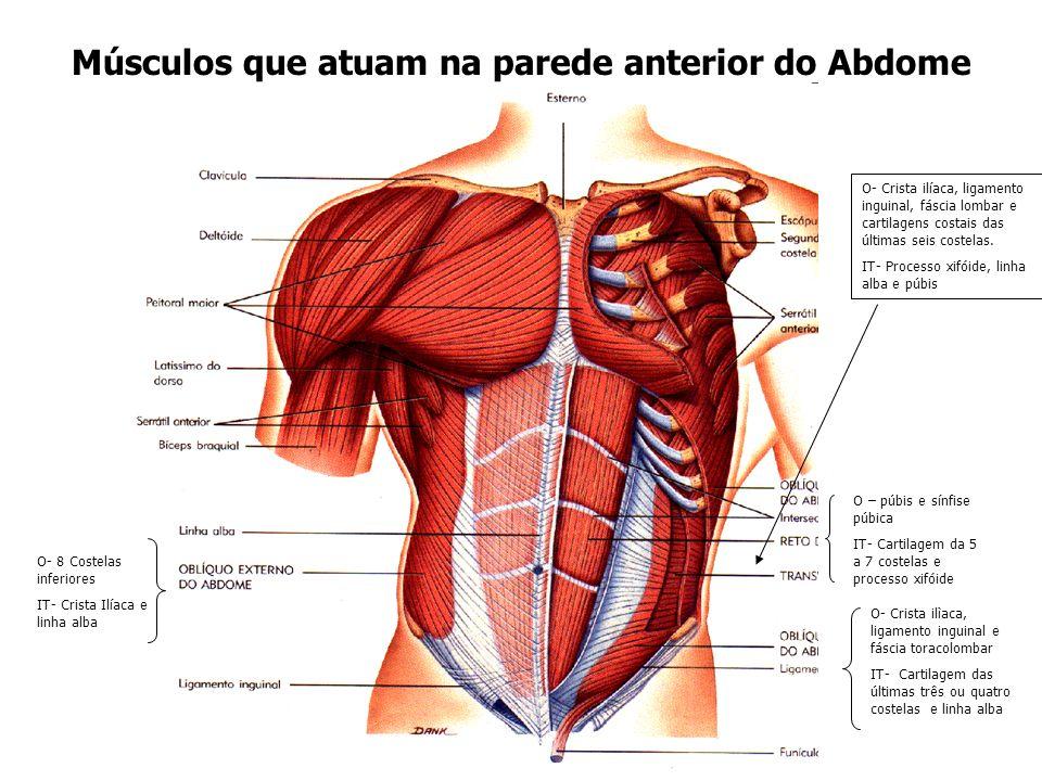Músculos que atuam na parede anterior do Abdome O – púbis e sínfise púbica IT- Cartilagem da 5 a 7 costelas e processo xifóide O- 8 Costelas inferiore