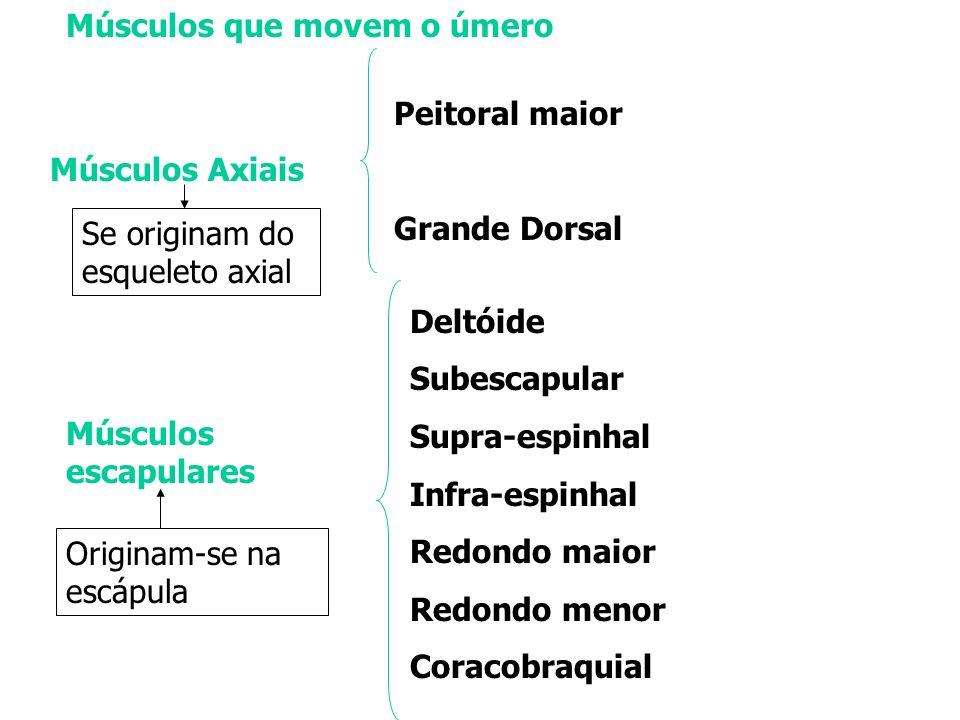 Músculos Axiais Peitoral maior Grande Dorsal Músculos escapulares Se originam do esqueleto axial Originam-se na escápula Deltóide Subescapular Supra-e
