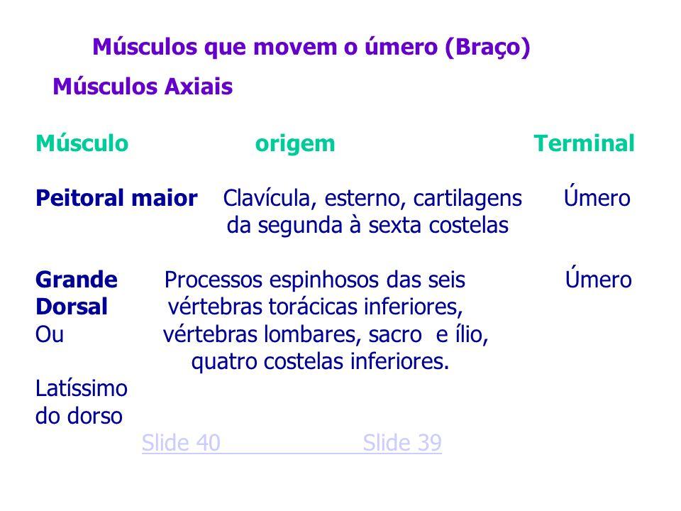 Músculos que movem o úmero (Braço) Músculo origem Terminal Peitoral maior Clavícula, esterno, cartilagens Úmero da segunda à sexta costelas Grande Pro