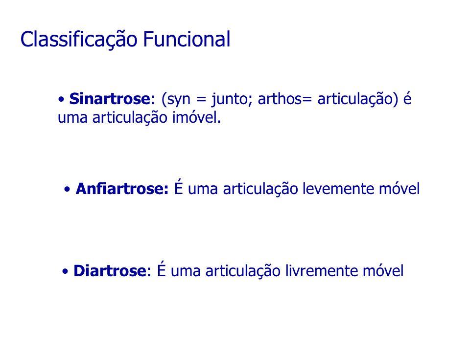 Classificação Funcional Sinartrose: (syn = junto; arthos= articulação) é uma articulação imóvel. Anfiartrose: É uma articulação levemente móvel Diartr