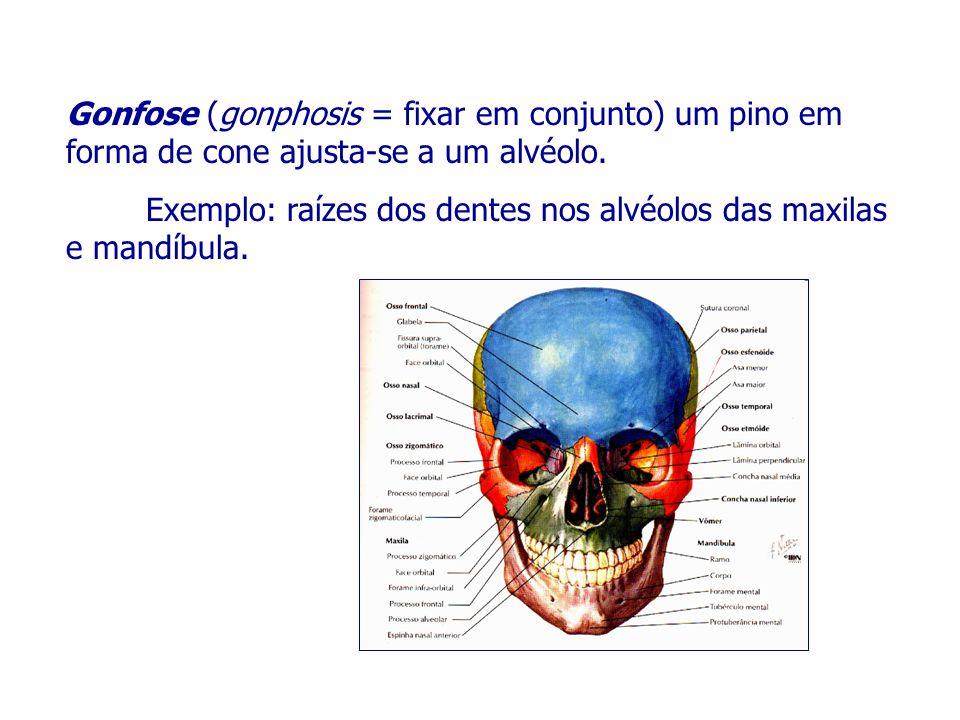 Músculos da Expressão facial Músculo Inserção de origem Inserção terminal (ponto fixo) (ponto móvel) Zigomático maior - osso zigomático - pele, orbicular da boca Zigomático menor – osso zigomático – Lábio superior Depressor do lábio inferior – Mandíbula – pele do lábio inferior Slide 40
