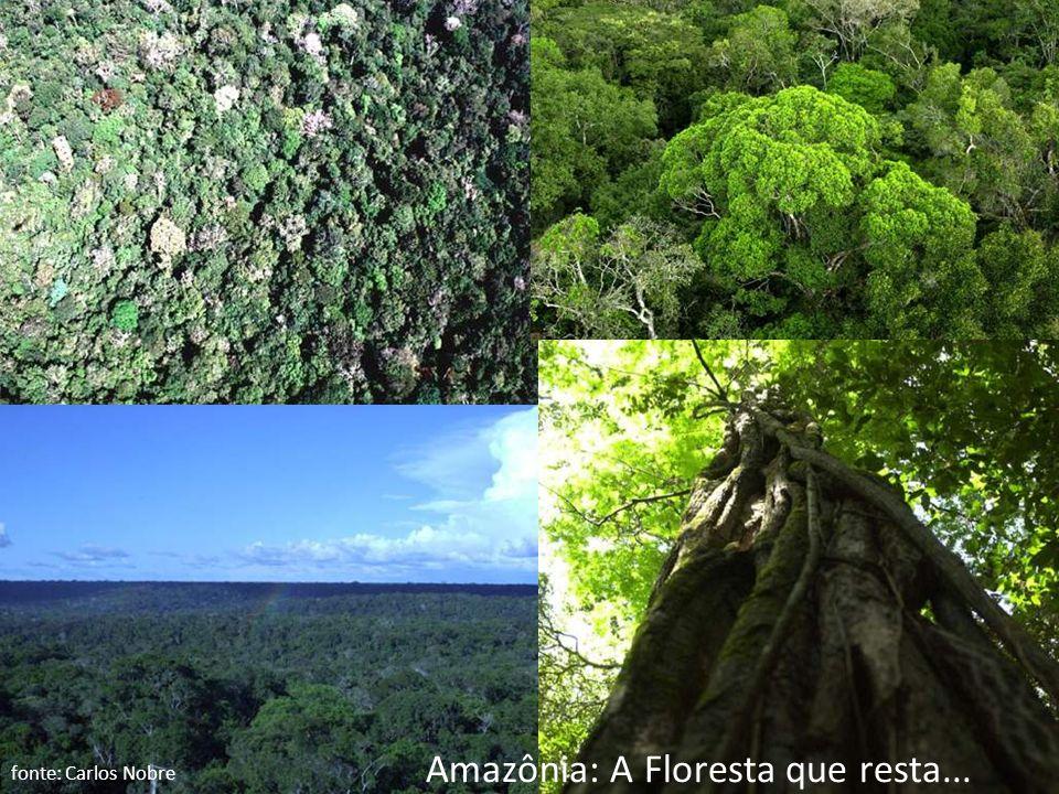 Amazônia: A Floresta que resta... fonte: Carlos Nobre
