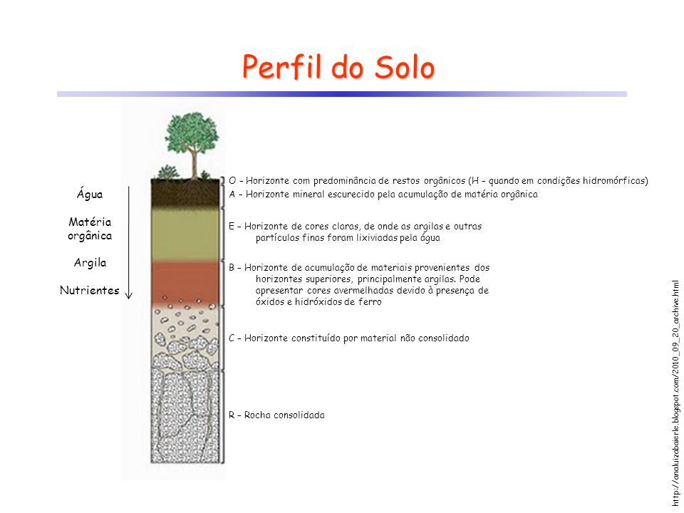 Perfil do Solo O – Horizonte com predominância de restos orgânicos (H – quando em condições hidromórficas) A – Horizonte mineral escurecido pela acumu