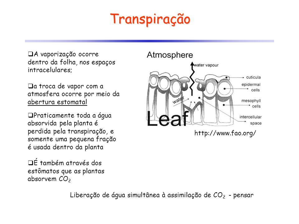 Transpiração A vaporização ocorre dentro da folha, nos espaços intracelulares; a troca de vapor com a atmosfera ocorre por meio da abertura estomatal
