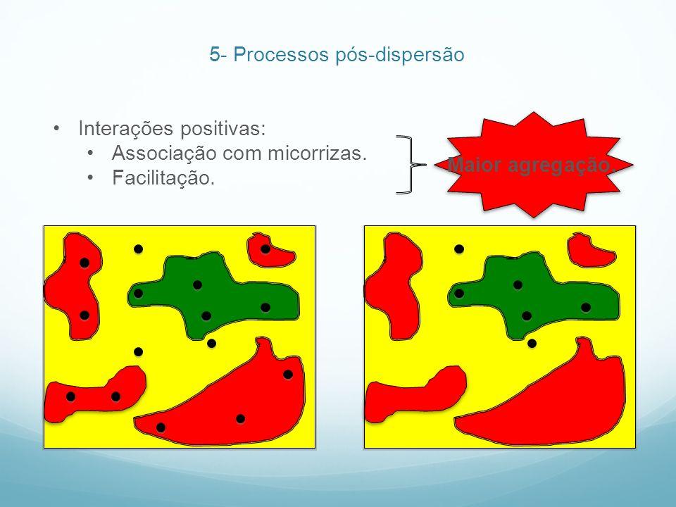 Maior agregação. Interações positivas: Associação com micorrizas. Facilitação. 5- Processos pós-dispersão