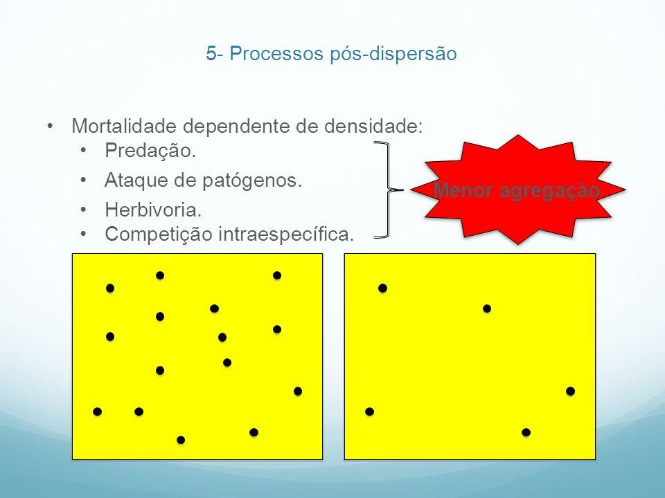 Mortalidade dependente de densidade: Predação. Ataque de patógenos. Herbivoria. Competição intraespecífica. Menor agregação 5- Processos pós-dispersão