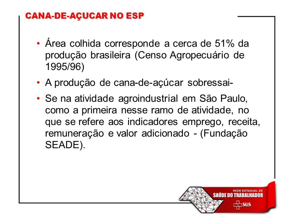 CANA-DE-AÇUCAR NO ESP Área colhida corresponde a cerca de 51% da produção brasileira (Censo Agropecuário de 1995/96) A produção de cana-de-açúcar sobr