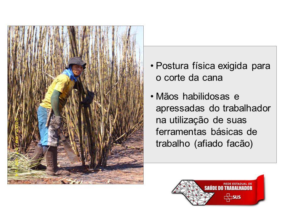 Postura física exigida para o corte da cana Mãos habilidosas e apressadas do trabalhador na utilização de suas ferramentas básicas de trabalho (afiado