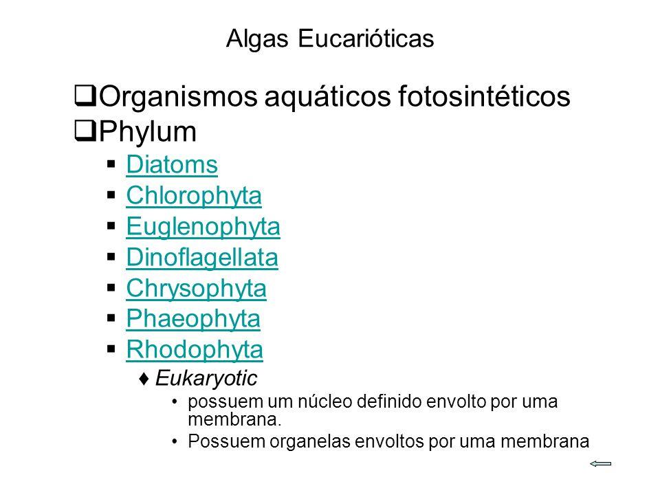 Algas Eucarióticas Organismos aquáticos fotosintéticos Phylum Diatoms Chlorophyta Euglenophyta Dinoflagellata Chrysophyta Phaeophyta Rhodophyta Eukaryotic possuem um núcleo definido envolto por uma membrana.
