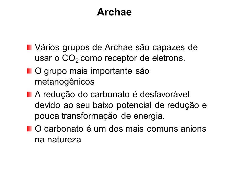 Archae Vários grupos de Archae são capazes de usar o CO 2 como receptor de eletrons. O grupo mais importante são metanogênicos A redução do carbonato