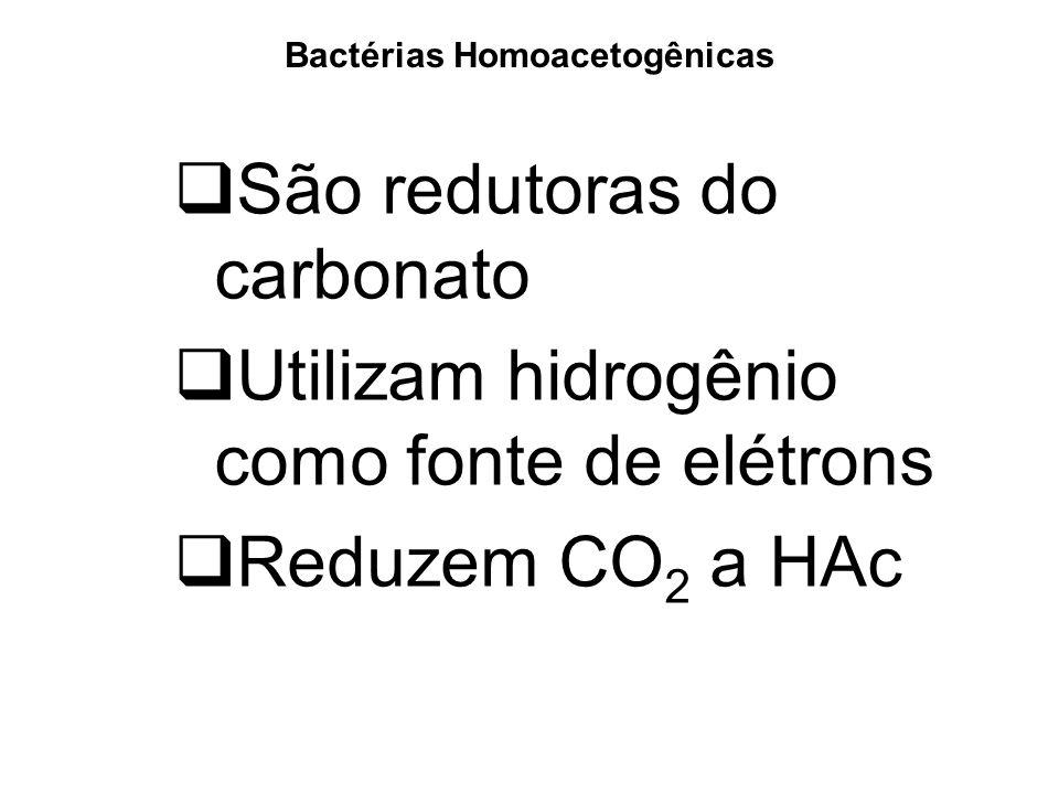 Bactérias Homoacetogênicas São redutoras do carbonato Utilizam hidrogênio como fonte de elétrons Reduzem CO 2 a HAc