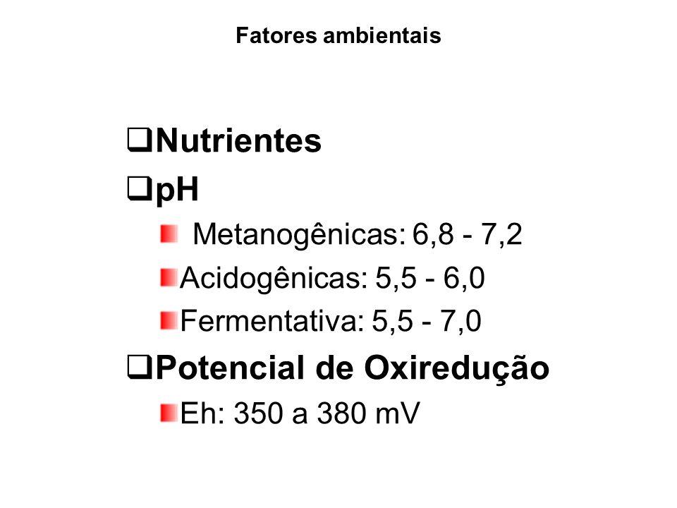 Reator UASB Características do Lodo Alta decantabilidade Elevada superfície ativa Floculento ou granular Produção de biomassa em excesso Pouca produção de lodo excedente.