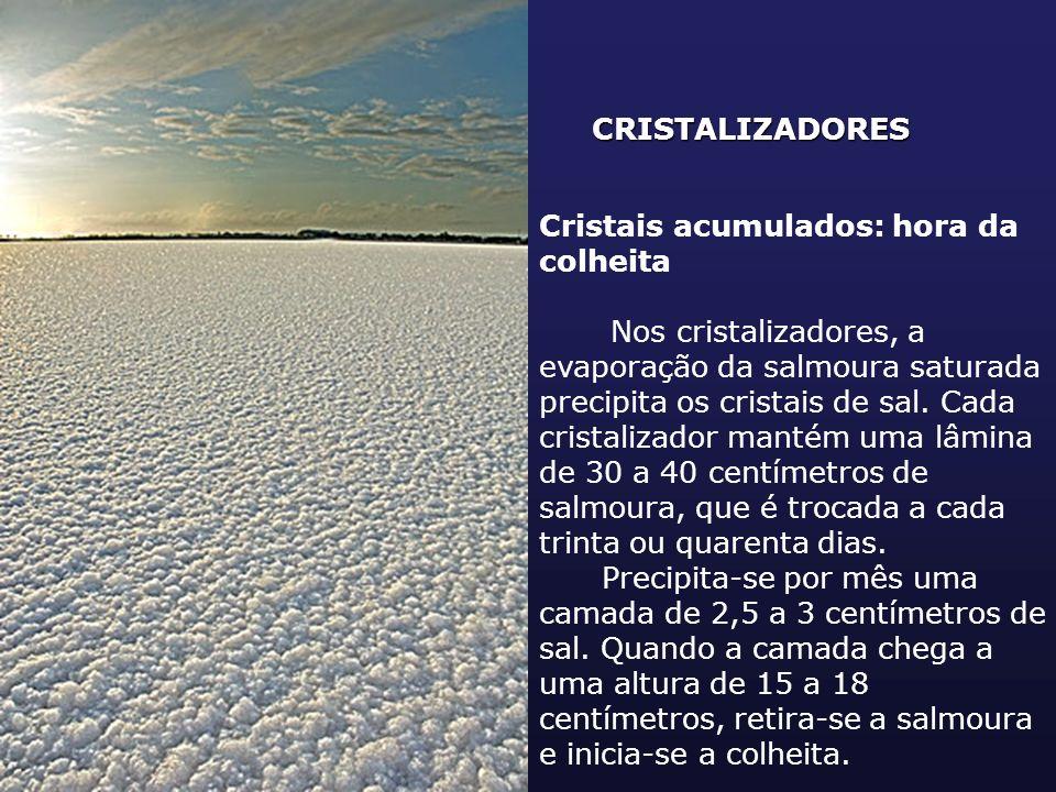 CRISTALIZADORES Cristais acumulados: hora da colheita Nos cristalizadores, a evaporação da salmoura saturada precipita os cristais de sal. Cada crista