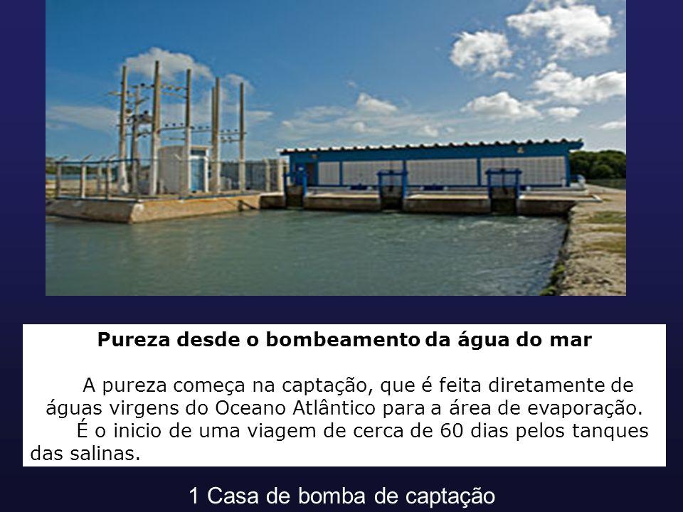 Pureza desde o bombeamento da água do mar A pureza começa na captação, que é feita diretamente de águas virgens do Oceano Atlântico para a área de eva