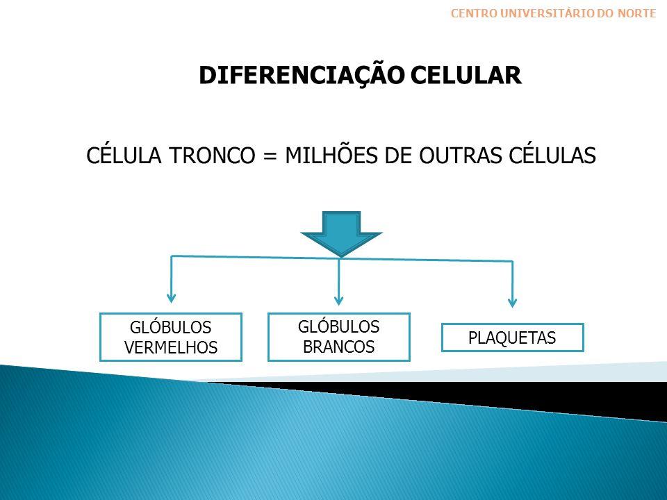 DIFERENCIAÇÃO CELULAR CÉLULA TRONCO = MILHÕES DE OUTRAS CÉLULAS GLÓBULOS VERMELHOS GLÓBULOS BRANCOS PLAQUETAS CENTRO UNIVERSITÁRIO DO NORTE