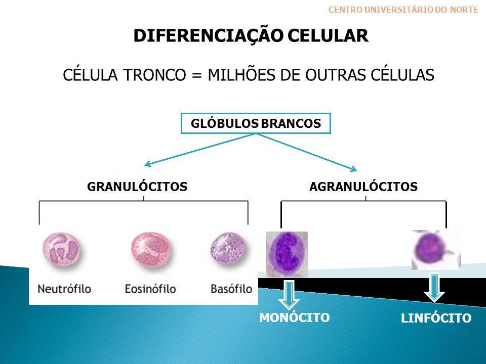 DIFERENCIAÇÃO CELULAR CÉLULA TRONCO = MILHÕES DE OUTRAS CÉLULAS GLÓBULOS BRANCOS AGRANULÓCITOSGRANULÓCITOS CENTRO UNIVERSITÁRIO DO NORTE MONÓCITO LINFÓCITO