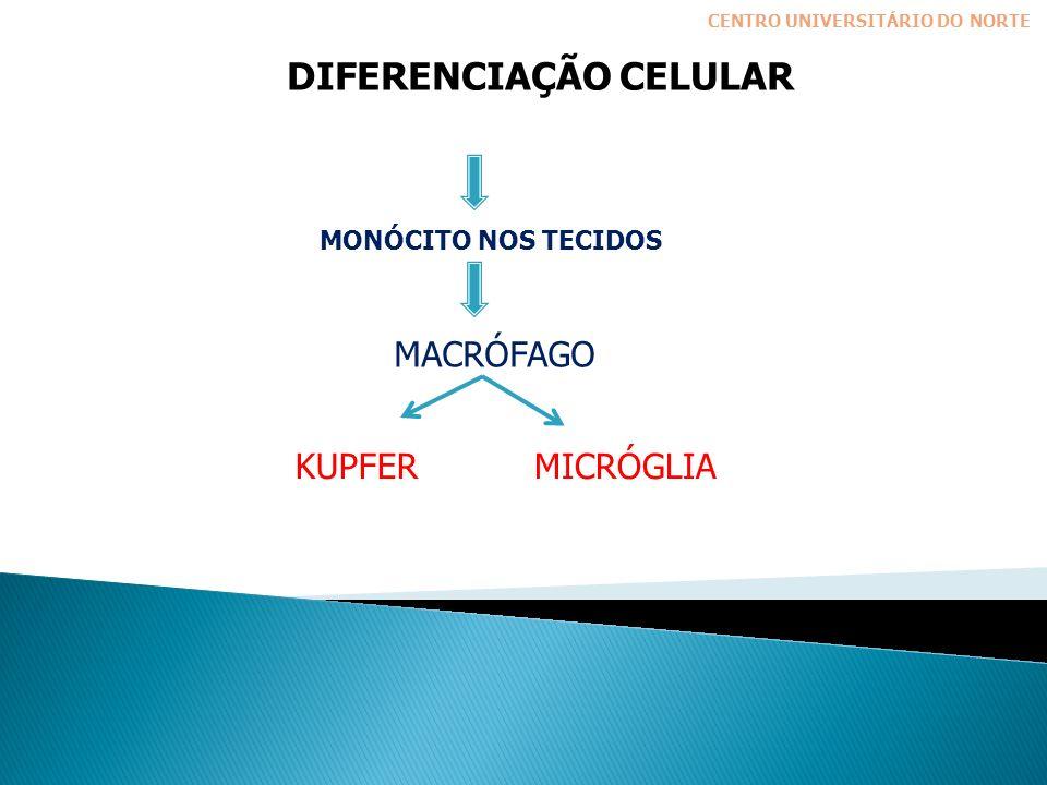 DIFERENCIAÇÃO CELULAR CENTRO UNIVERSITÁRIO DO NORTE MONÓCITO NOS TECIDOS KUPFERMICRÓGLIA MACRÓFAGO