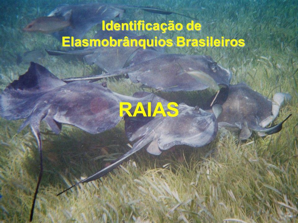 RAIAS Identificação de Elasmobrânquios Brasileiros Elasmobrânquios Brasileiros